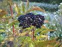Nádherné plody na levém břehu Moravy v Devínské Nové Vsi.