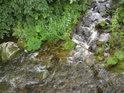 Zlatý potok posiluje Moravu zprava u obce Horní Hedeč.
