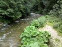 Kamenný náplav na levém břehu řeky Moravy nad Hanušovicemi.