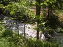 Odraz slunečních paprsků se sytě zeleným javorovým listím dodává řece jedinečné kouzlo.