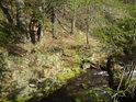 Romantický úsek Moravy pod bukovým svahem.