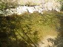 Doslova prosluněné vody řeky Moravy.