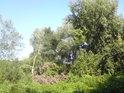 Téměř nepropustný pravobřežní luh Moravy u Týnce.