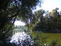 Tak nějak vypadá typický obraz dolního toku Moravy v dlouhém úseku od soutoku s Dyjí až k Děvínu.