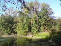 Lužní snímek s tím, co k luhu patří, tedy slepé rameno s polehanými padlými stromy, topoly a osikami, jakož i blízkou mokrou loukou, tak to vypadá nad soutokem Moravy a Myjavy.