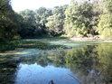 Jedno z bezpočtu slepých ramen Moravy, toto bychom nad soutokem s řekou Myjava.