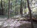 Cahnov – Soutok je národní přírodní rezervace v nitru lužních lesů v srdci soutoku řeky Moravy a Dyje.