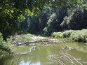 Morava pod městem Litovel protéká skutečnými luhy, kde můžeme spatřit, pokud se vůbec do srdce takového luhu odvážíme, přirozenou činnost řeky, která rozhodně není splavná a už vůbec ne pro rozmazlené sváteční vodáky.