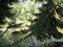 Pro překrásné přírodní scenérie netřeba cestovat na Aljašku, vždyť jich máme spoustu doslova za humny! Takový nad vodu rostoucí strom najdeme na pravém břehu řeky Moravy v národní přírodní rezervaci Ramena řeky Moravy, pouhých 5 km na kole nebo pěšky od okrajové části města Olomouc. Vážíme si jich vůbec?