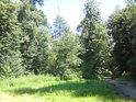 Lužní les s malou loukou a cestou na levém břehu Moravy oproti obci Hynkov.