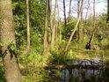 Přírodní rezervace Kačení louka leží u železniční trati mezi stanicemi Moravičany a Červenka na levém břehu řeky Moravy.