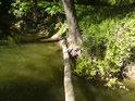 Přírodní památka Za mlýnem se nachází u obce Nové Mlýny na levém břehu řeky Moravy a rozhodně je zde nač se dívat.