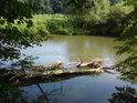 Náplav u pravého břehu řeky Moravy se jeví jako ráj pro ryby a možná i pro rybáře.