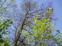 Jaro v plném rozpuku malém chráněném území na levém břehu řeky Moravy nedaleko obce Nové Zámky, které bylo vyhlášeno jako přírodní památka U zámecké Moravy.