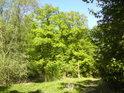 Cesta přes přírodní rezervaci Hejtmanka, které leží na pravém břehu řeky Moravy, hned vedle silnice mezi obcemi Nové Zámky a Mladeč a sousedí s národní přírodní rezervací Vrapač.
