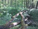 Národní přírodní rezervace Vrapač požívá solidního stupně úřední ochrany. Je to úžasný lužní les na pravém břehu řeky Moravy nad městem Litovel.