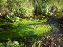 Přírodní památka Častava je přilehlá k Sedlisku. Jedná se o krásné pravobřežní slepé rameno řeky Moravy.