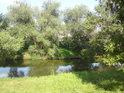 Vrby na opačném, levém břehu Moravy mají svou paměť. Kdyby však mohly vyprávět, asi by nejedno citlivé srdce zaplakalo a to nejen pro vodní zkázu.