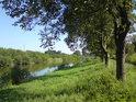 Ořechová alej na pravém břehu Moravy v Otrokovicích.