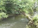 Některé stromy se nad řekou dlouze kloní a kloní, až si je voda jednou vezme.