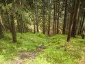 První přístupný pravobřežní přítok Moravy je, jak jinak, horským potůčkem.