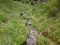 Další z pravobřežních přítoků Moravy má travnaté břehy.