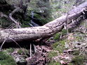 Napadení dřevokaznými škůdci je tu patrné.