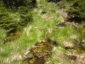 Klidné horské tůňky na řece Moravě.