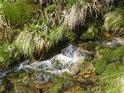 Nádherné mechy jsou věrnými společníky řeky Moravy.