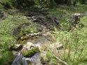 Tok řeky je tu neustále atakován padajícími stromy, větvemi i vším možným.