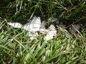Zdá se, že takto odrbal šupiny z bílé ryby nějaký rybář, který se ani nepokoušel udělat pořádek po svém činu.