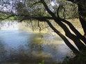 Nádherně s klonící vrby na pravém břehu Moravy nedaleko obce Bezměrov.