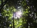 Přírodní rezervace Kolébky se nachází na pravém břehu řeky Moravy pod obcí Nedakonice na vnějším okraji Předměstského lesa.
