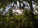 Zapadající Slunce na břehu Moravy u Rohatce.