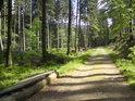 Bývalá lávka přes Moravu teď leží u lesní cesty.