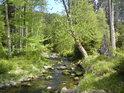 Stromy lemují Moravu jak živé, tak umírající.