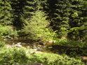 Stromy v korytě Moravy to nemají jednoduché a svůj boj s vodním živlem vydrží vést jen do času.
