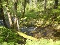 Mechem porostlý padlý kmen asi příliš stabilní břeh řece nečiní.