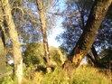 Okus stromů zespoda lze přičítat  různé zvěři vodní i suchozemské.